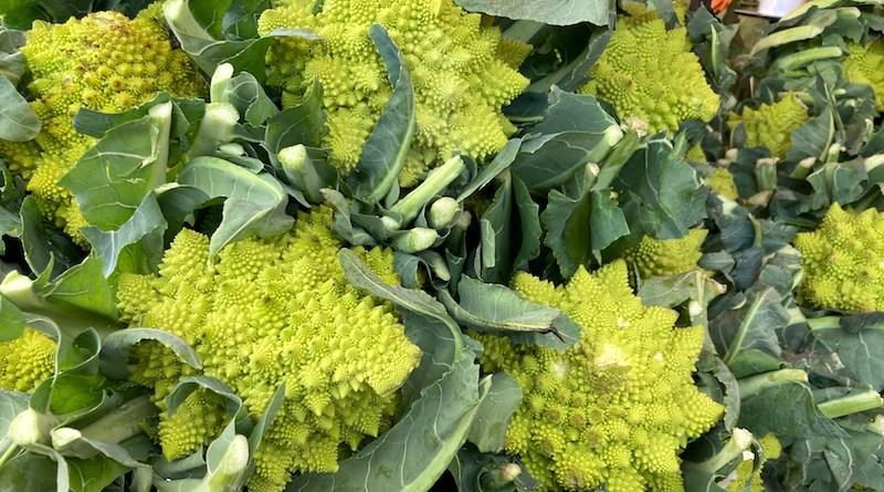 Romanesco Cauliflower at Bayview Farms