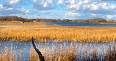 Duck Blind, West Creek
