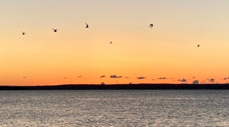 dawn_birds
