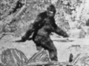 25 thousand dollars to whoever manages to hunt Bigfoot in Oklahoma