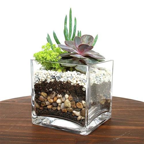 Indoor Water Plants Names