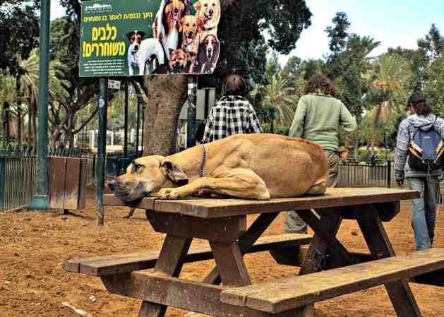 dog-park-diseases3-retouched-1