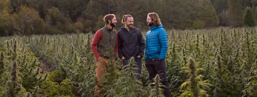Aaron Howard, Mason Walker, and Nathan Howard of East Fork Cultivars standing in a CBD-rich cannabis plot of land.