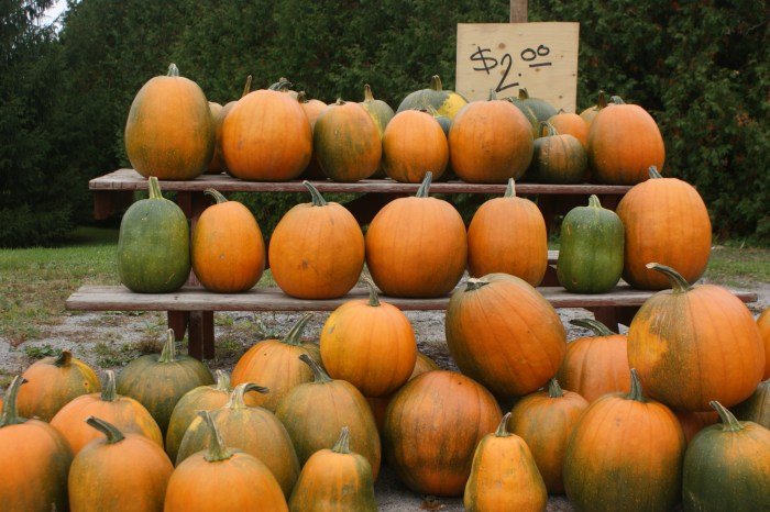 pumpkins East Gwillimbury