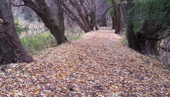 Fall in East Gwillimbury