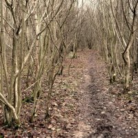 Georgina Cops comb Oakwood Copse