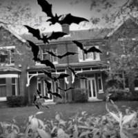 Bats won't stop flats