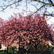 Stamford Hill Pic Martin Hopkins
