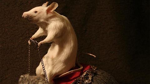 Taxidermy Mouse. Pic: Amanda Sutton.