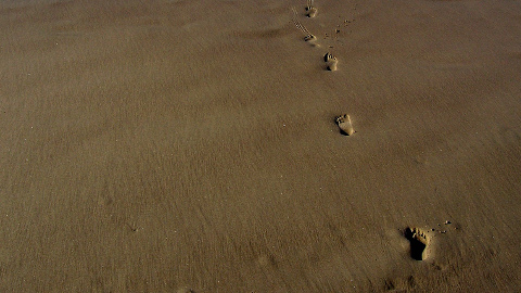 will be running through teh Sahara pic: