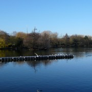 South Norwood Lakes