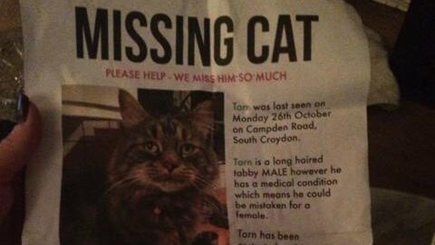 Some 34 cats in and near Croydon have been reported missing in the last two years Pic: SNARL