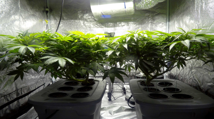 Cannabis farm similar to the two uncovered in raid