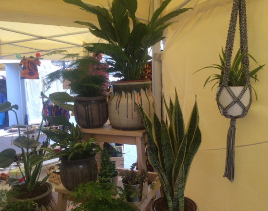 Potted products, including various attractive pots and plants. Pic: William Taylor-Gammon