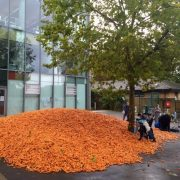 A 29 tonne pile of carrots on Goldsmiths campus.
