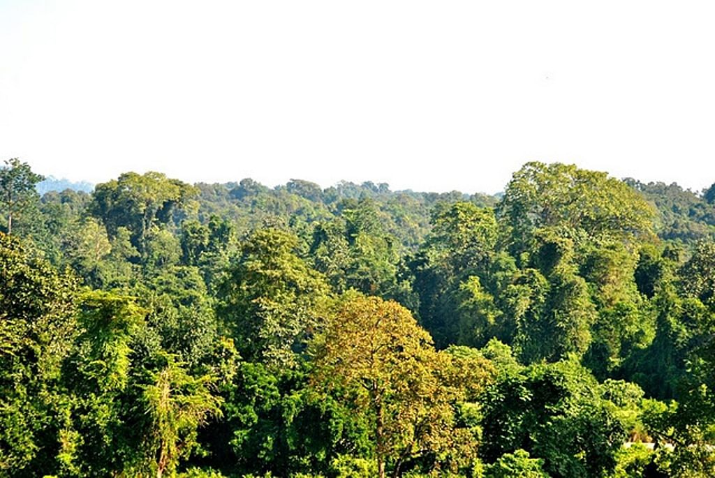 Assam's Dihing Patkai formally inaugurated as National Park