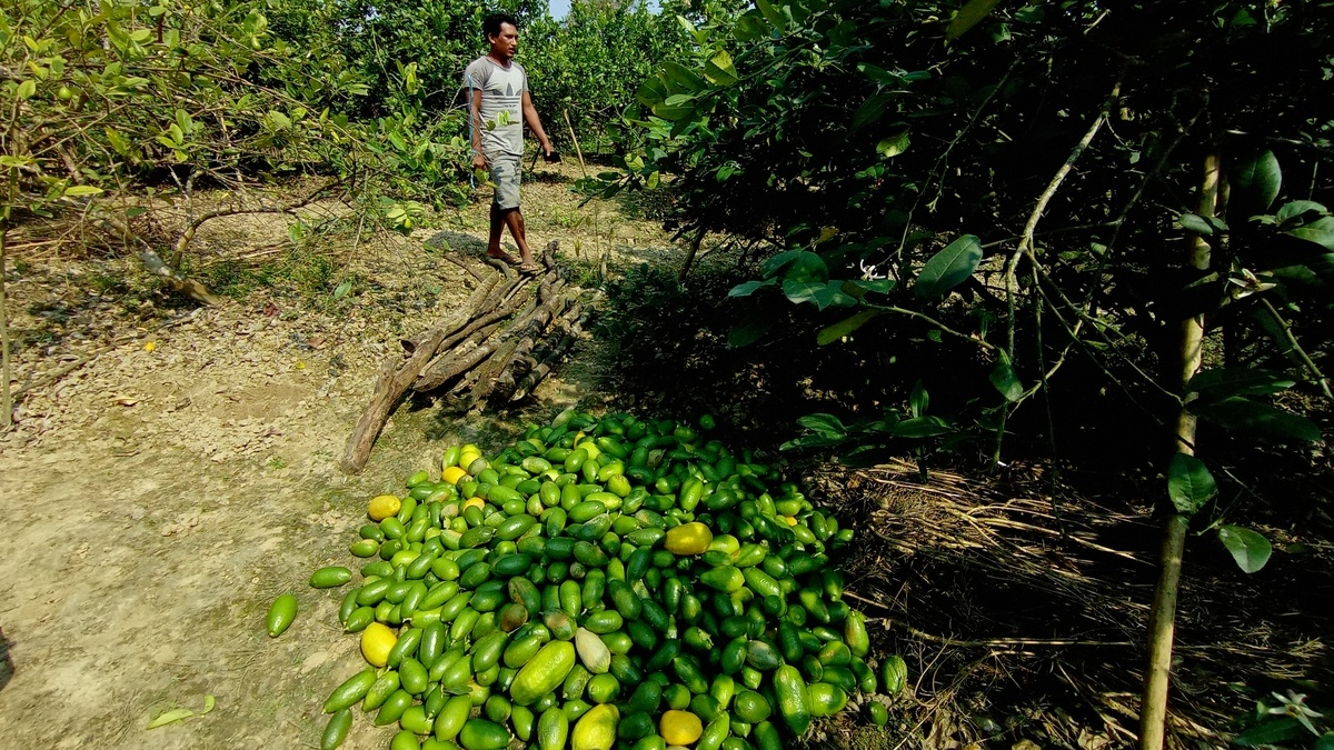 sadiya lemon farmer