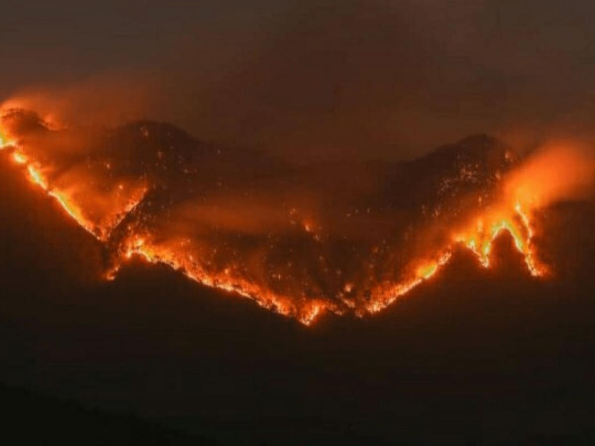 Mizoram govt constitutes state-level probe team over recent forest fires