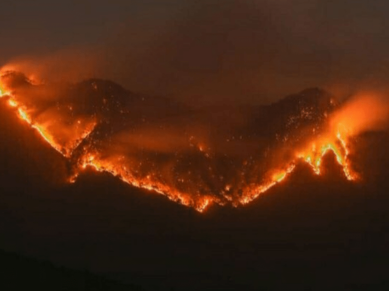 Mizoram govt constitutes state-level probe team over recent forest fires
