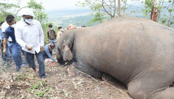 Assam: Environment activists demand scientific probe into elephant deaths