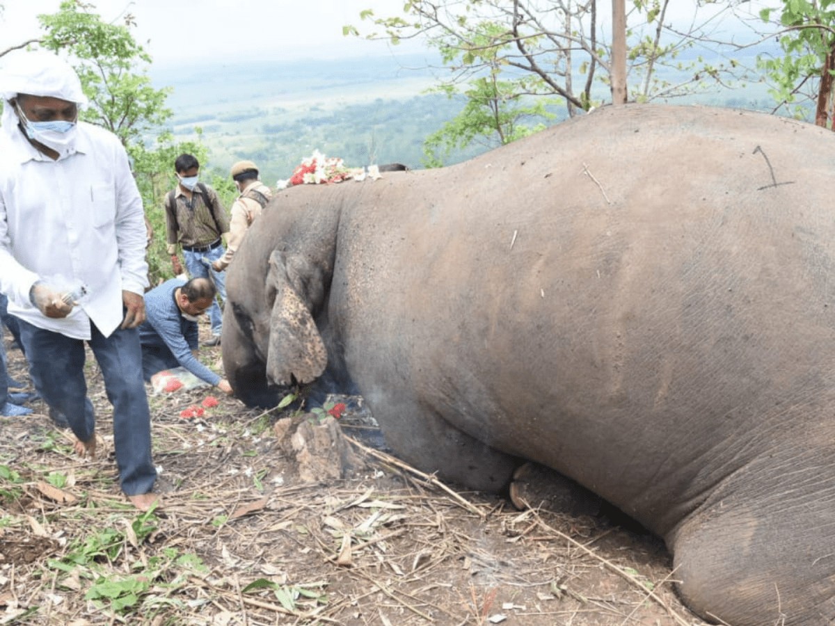Forest Minister orders inquiry into death of 18 elephants