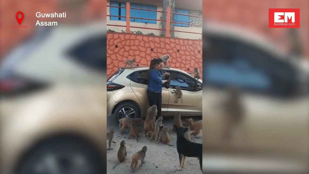 Watch: Guwahati Social worker steps out to rescue stray dogs in the city