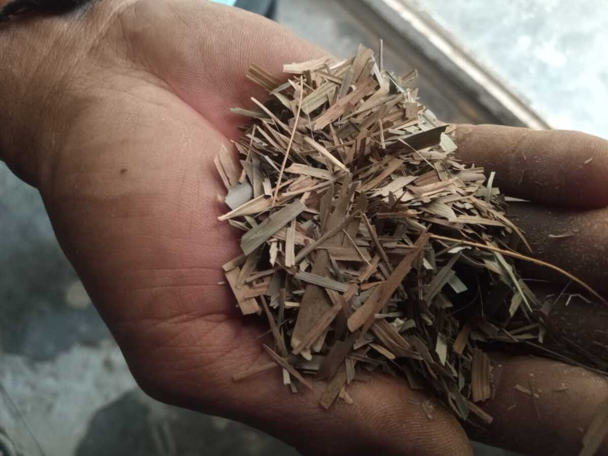 Tripura tribal man brews tea from bamboo leaves, eyes broad marketing