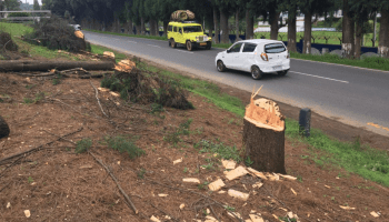 Shillong-Dawki NH work to continue, trees to be planted later: Meghalaya Dy CM