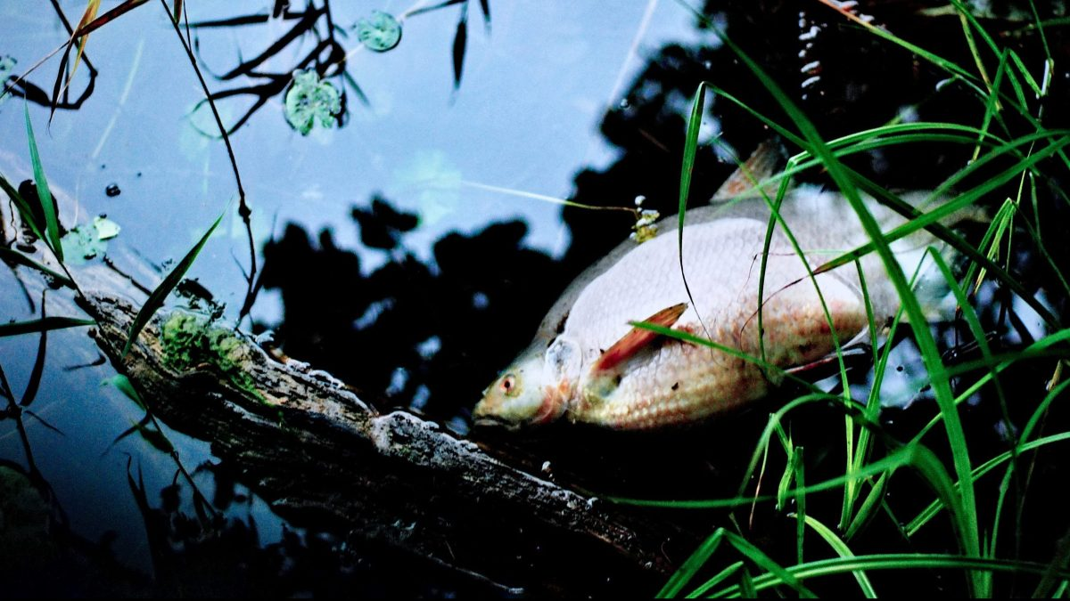 Hundreds of fish found dead in Guwahati pond