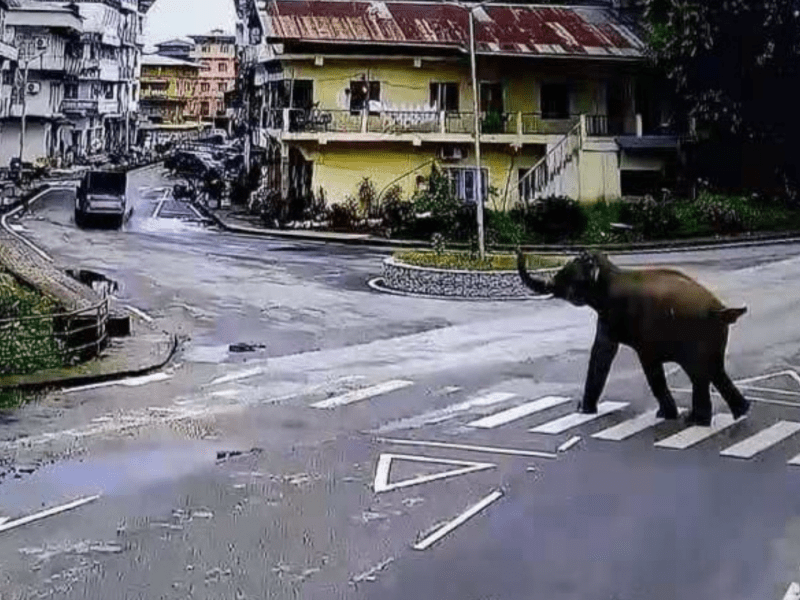 One killed, another hurt as elephant damages house in Assam
