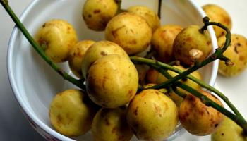 PEDA facilitates export of Assamese Burmese grapes to Dubai