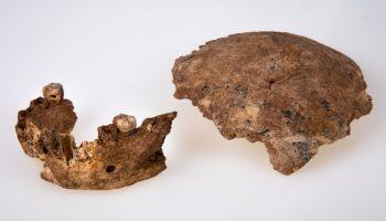 The Nesher Ramla Homo