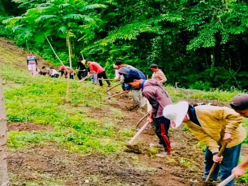 Jhum farming: restoring ecosystem