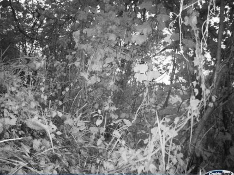 Spot the tiger: This image from Mizoram's Dampa Tiger Reserve is going viral!