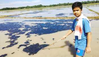 Assam: ONGC's crude oil pipeline leaks at Nazira, several acres of paddy cultivation affected