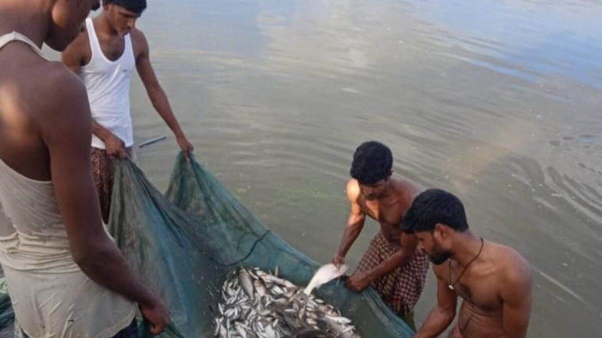 Assam govt mulls creating 2,000 ponds for fish production