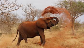 elephant day