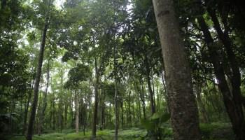 Udalguri Forest