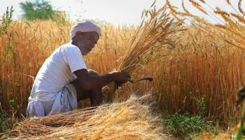 Govt hikes minimum support price for wheat by Rs 40 to Rs 2,015 per quintal