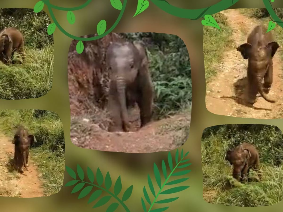 Tamil Nadu Baby elephant