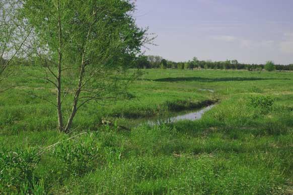 163-lamar-county-near-paris-texas-2