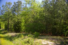 13_3_trees_small-winnsboro-tx