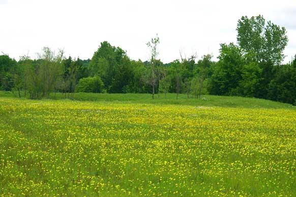 42-8-paris-texas-meadow-pond-meadow