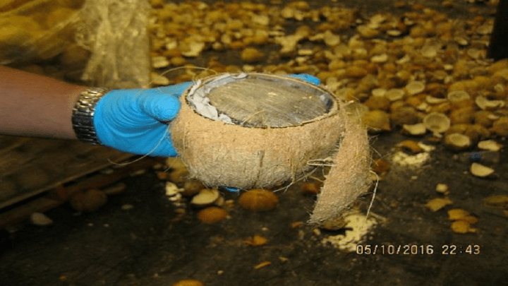 coconut_1463152248245.PNG