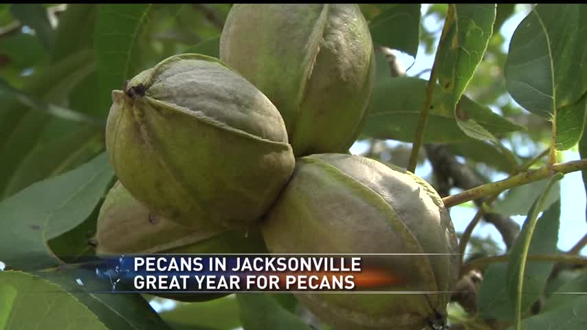 Pecan Production_76693588-159532