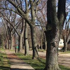 Tree removal funds, Flint Fresh, crime and safety among CCNA highlights