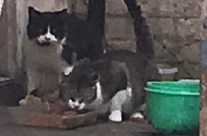 Carriage Town cats tended by kind-hearted neighbor:  more help needed