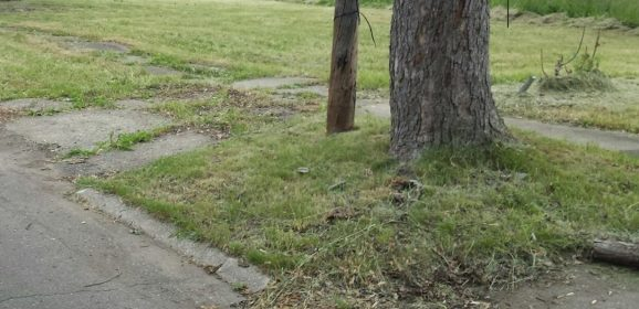 Land Bank seeks seasonal/temporary workers for $11/hour 40 hour work week on mowing and trash abatement crews