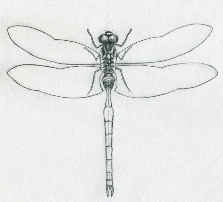 https://i1.wp.com/www.easy-drawings-and-sketches.com/images/dragonfly-drawings08.jpg