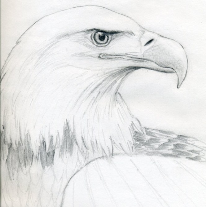 Amazing Easy Eagle Drawings Pictures Inspiration - Electrical ...